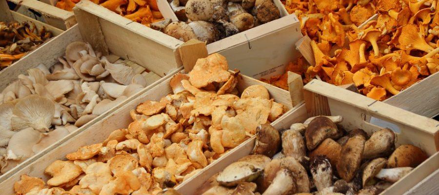 mushrooms-523629_960_720
