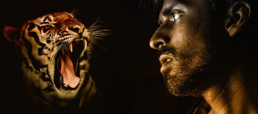 predator-2217941_960_720-tiger