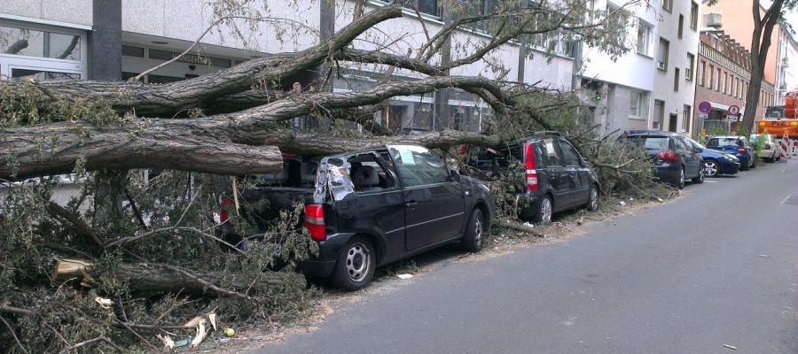 fallen-tree-1088516_1280
